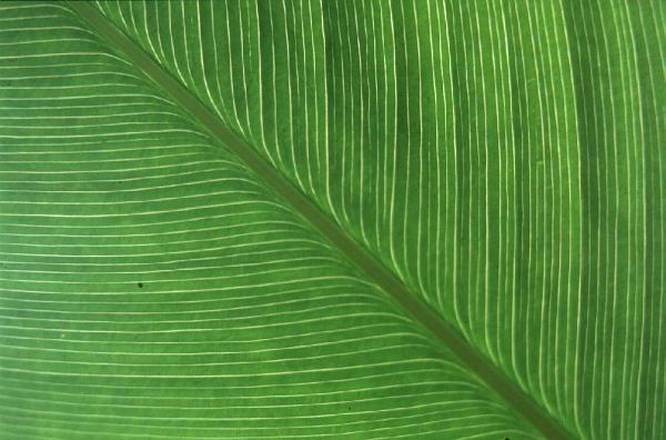 Kew Garden - Leaf