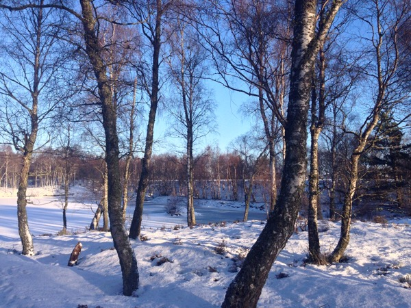 The frozen lake through the trees Craigellachie National Nature Reserve