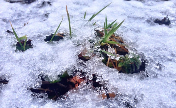 A little snow and ice - grass through the snow