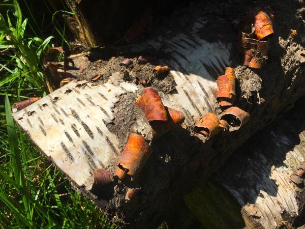Birch Wood, Southrey, Lincolnshire