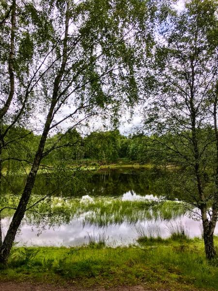 Craigellachie National Nature Reserve