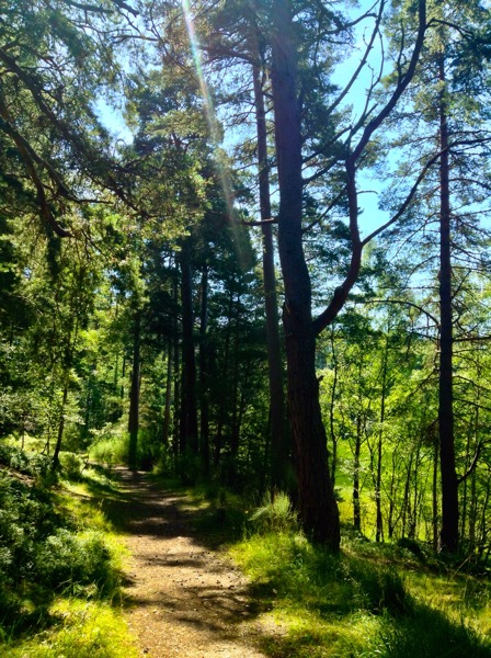 Walking and Geocaching - Grantown on Spey