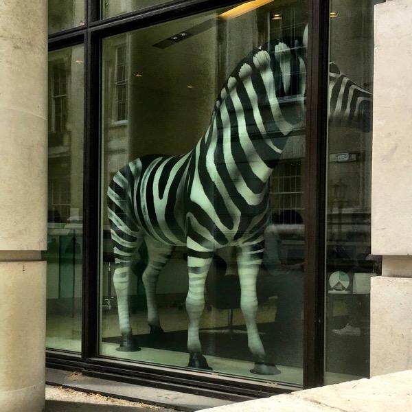 A zebra!