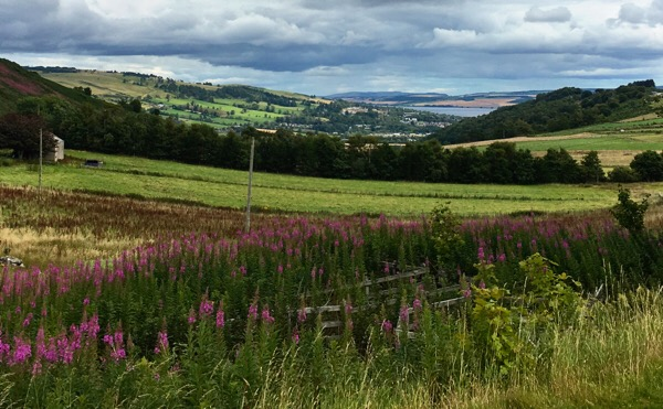 Cromarty Firth from Knock Farril