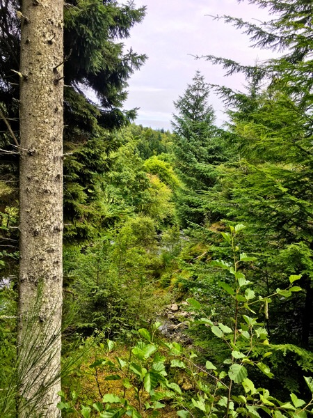 Glenurquhart Forest