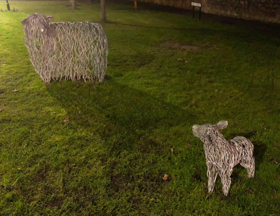 Sheep in Branston