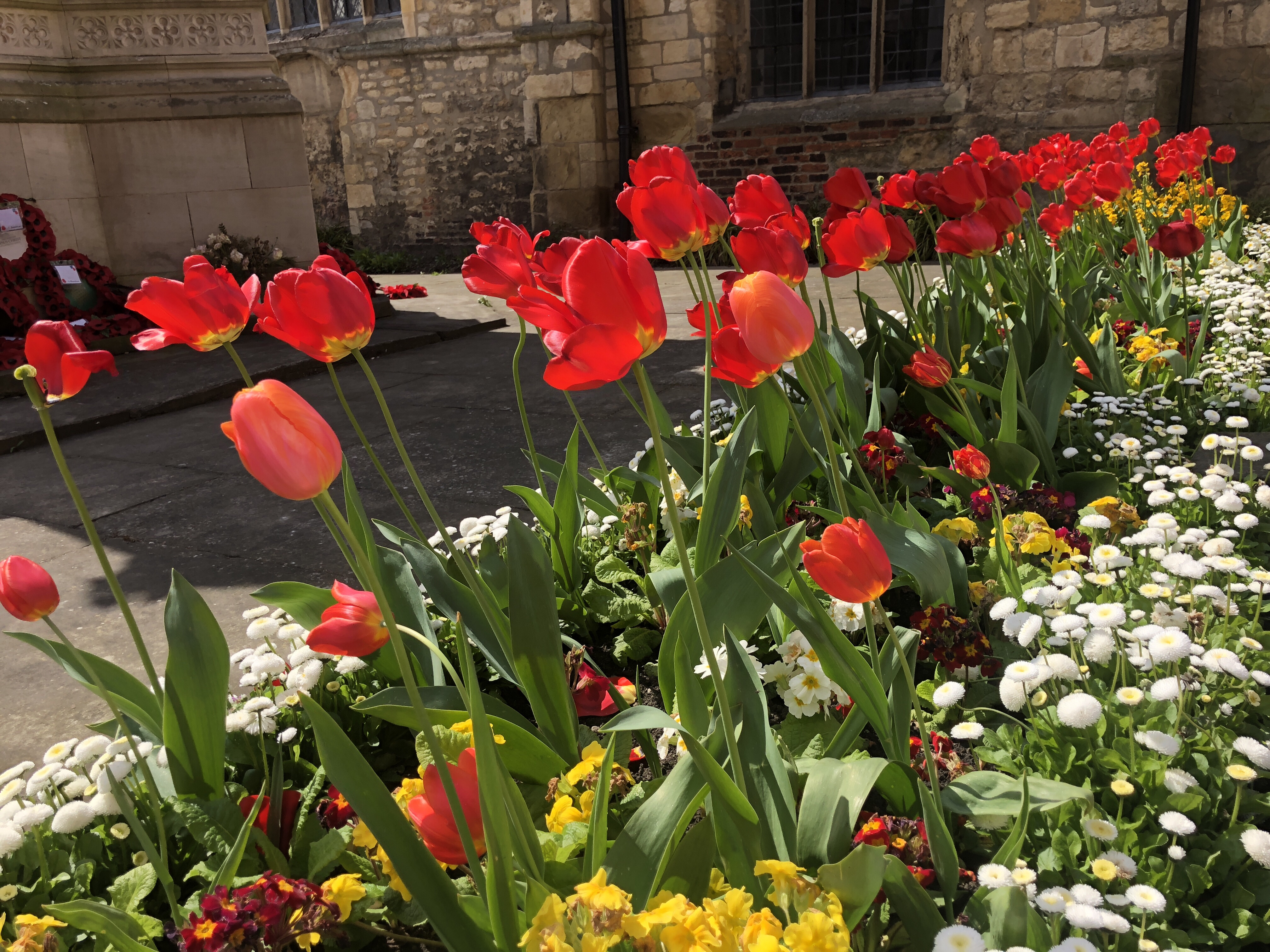 Lincoln City Centre - tulips