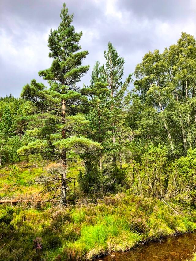 Old Logging Trail